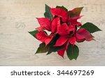 Poinsettia  Christmas Star  On...