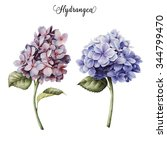 hydrangea and leaves ... | Shutterstock . vector #344799470
