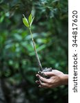 Young Green Mangrove Tree On...