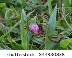 Small Pink Flower In The Fores...