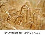 Barley Field Detail