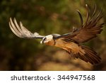 hovering adult bearded vulture... | Shutterstock . vector #344947568