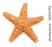 starfish isolated on white... | Shutterstock . vector #34501702