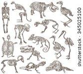 bones and skulls of different... | Shutterstock . vector #345025100