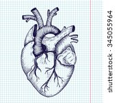 anatomical heart   vector... | Shutterstock .eps vector #345055964