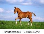 Beautiful Red Foal In The...