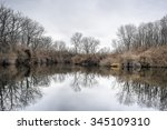 Bare Trees Reflected In Still...