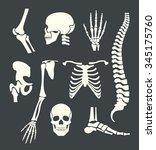 human skeleton. vector white... | Shutterstock .eps vector #345175760