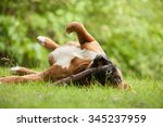 Stock photo happy dog photographed outside in the forest 345237959