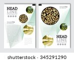 business brochure design... | Shutterstock .eps vector #345291290