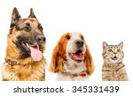 Stock photo portrait of pets closeup isolated on white background 345331439