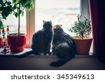 Two Cats Sits On Window Sill...