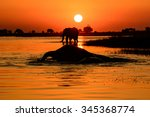 Elephant Sunset A Picture Of A...