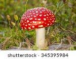 Little Mushroom Amanita Muscaria