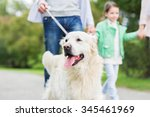 Stock photo family pet domestic animal and people concept close up of family with labrador retriever dog on 345461969