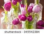 Beautiful Purple Tulip Flowers...