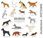 dogs breed set with bull... | Shutterstock .eps vector #345722840