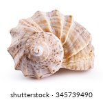 Sea Shell Isolated On A White...