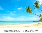 Palms On The Sandy Beach