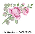 delicate vintage roses.... | Shutterstock . vector #345822350