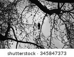 Silhouette Of Lonely Raven...
