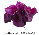 Bouquet Of  Violet Calla Lilly...
