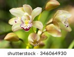 Orchid Flowers With Leaves In...
