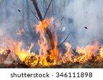 Bush Fire Destroy Tropical...