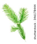 fir branch | Shutterstock . vector #346178444