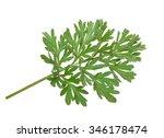 Small photo of Wormwood (absinthium)