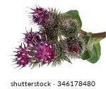 Medicinal Plant  Burdock ...