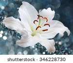 White Lily Flower On Backgroun...