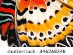 Leopard Lacewing Butterfly Win...