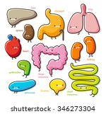 vector organs set on white... | Shutterstock .eps vector #346273304