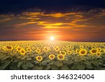 field of blooming sunflowers on ... | Shutterstock . vector #346324004