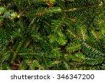 pine branches | Shutterstock . vector #346347200