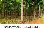 panorama of trunks in... | Shutterstock . vector #346386833