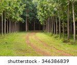 pathway or track leads through... | Shutterstock . vector #346386839