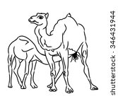 the contour of a camel on white ... | Shutterstock .eps vector #346431944