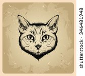cat in tattoo style | Shutterstock . vector #346481948