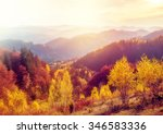 majestic trees with sunny beams ... | Shutterstock . vector #346583336
