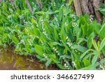 Lilies Of The Valley  Spring
