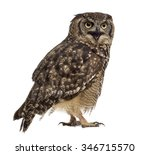 Stock photo spotted eagle owl bubo africanus years old in front of a white background 346715570