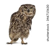 Stock photo spotted eagle owl bubo africanus years old in front of a white background 346715630
