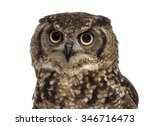 Stock photo close up of a spotted eagle owl bubo africanus years old in front of a white background 346716473