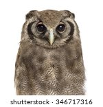 Stock photo close up of a verreaux s eagle owl bubo lacteus years old in front of a white background 346717316