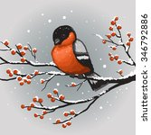 Colorful Winter Bullfinch On...