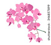 orchid vector flower | Shutterstock .eps vector #346857899