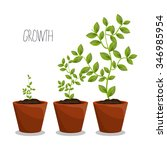 nature plants growth graphic... | Shutterstock .eps vector #346985954