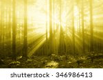 magical sun rays in forest... | Shutterstock . vector #346986413